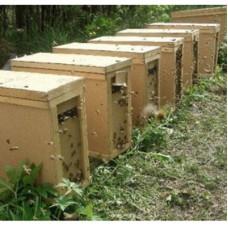 """Пчелопакет 4-х рамочный с пчеломаткой породы """"Бакфаст""""."""